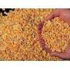 南非进口玉米期货到港价 Corn